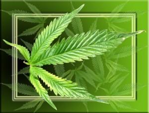 Cannabis auf Rezept: Auch in Deutschland ist das in Ausnahmefällen möglich
