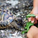 Wenn Haustiere krank machen – Bei Kleinkindern können Reptilien Infektionen auslösen