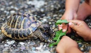 Wenn Haustiere krank machen - Bei Kleinkindern können Reptilien Infektionen auslösen