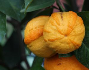 Orangenhaut: Sind Übergewichtige häufiger von Cellulite betroffen?