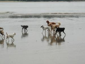 Gefährliche Hundebisse: Jeden Tag sterben 160 Menschen an Tollwut